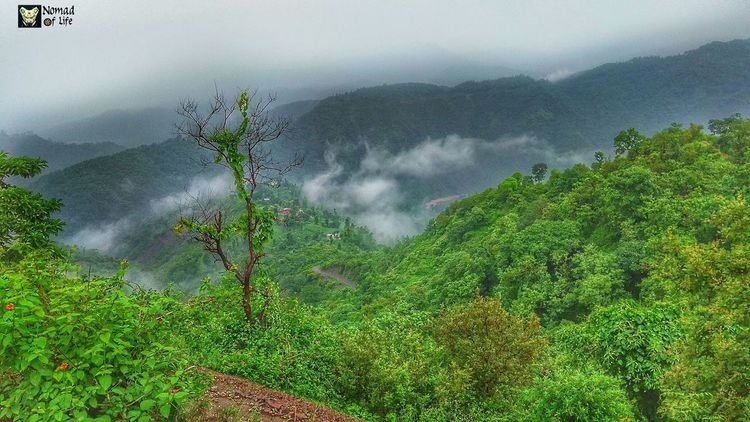 Rainy season + mountains + longdrive Nature Tree Outdoors Beauty In Nature Water No People Cloud - Sky Day Agriculture Mountain Growth Fog Freshness Sky Rainy Days☔ Nature_collection Raincollection Photography Shotoftheday Nature Travelgrams Traveldiary2017 Cloudscape High Angle View Dramatic Sky