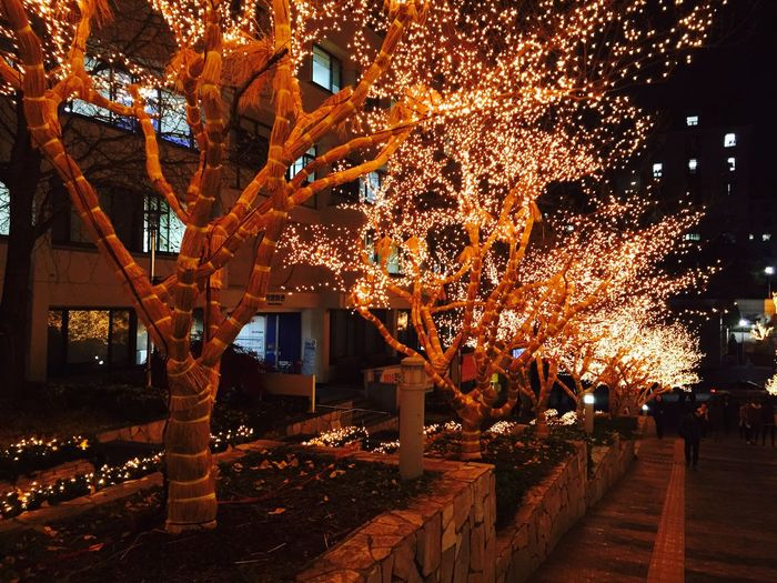University Campus University Christmas Christmas Lights Lights Night Night Lights Cityscapes Seoul South Korea