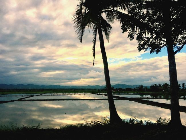 Miles Away Nature Reflection Beauty In Nature Water Sunset Tree Cloud - Sky Scenics Sky Tranquility Tranquil Scene Lake Landscape Growth No People Outdoors Mountain Day EyeEm Nature Lover Eyeem Philippines Farm Rice Field EyeEm New Here Hello World