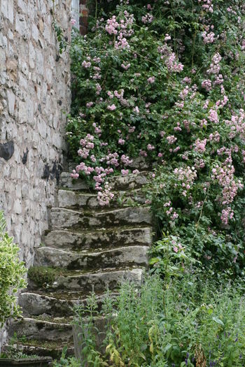 Architecture Beauty In Nature Day Flower Fragility Freshness Growth Nature No People Outdoors Sky Stairs Tranquility Tree The Secret Spaces