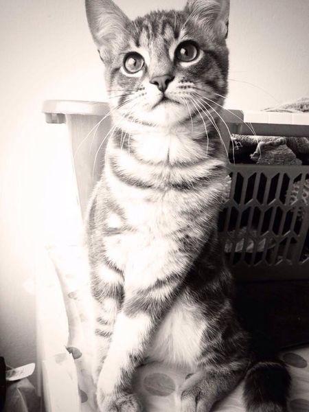 Cat Cute Beautiful Love
