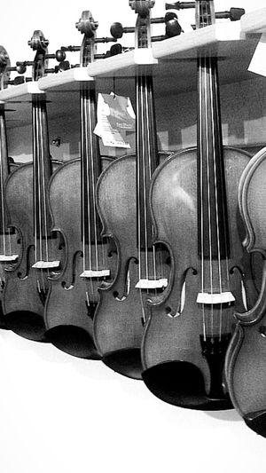Violin Black &