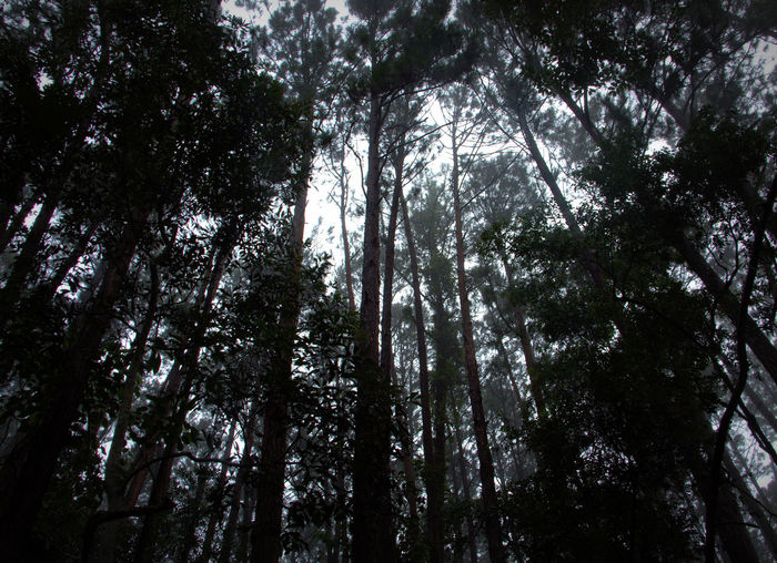 Beauty In Nature Dawn In Forest Forest Forest Trees Growth Horizontal Line Light And Dark Spaces Low Angle View Nature No People Outdoors Tranquility Trees Trees And Sky