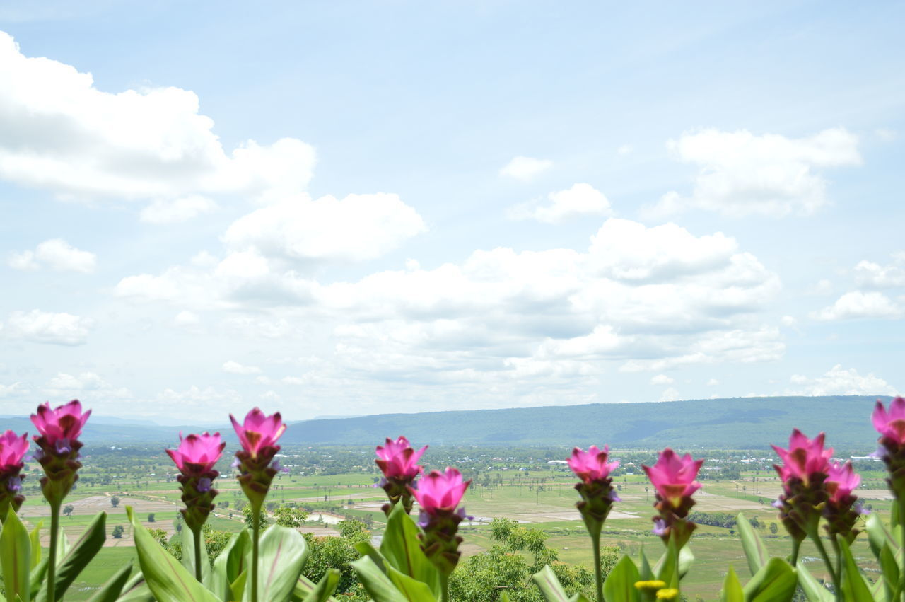 flower, plant, flowering plant, beauty in nature, sky, nature, growth, cloud - sky, vulnerability, freshness, fragility, day, land, scenics - nature, tranquil scene, flower head, tranquility, inflorescence, water, field, outdoors, no people, purple