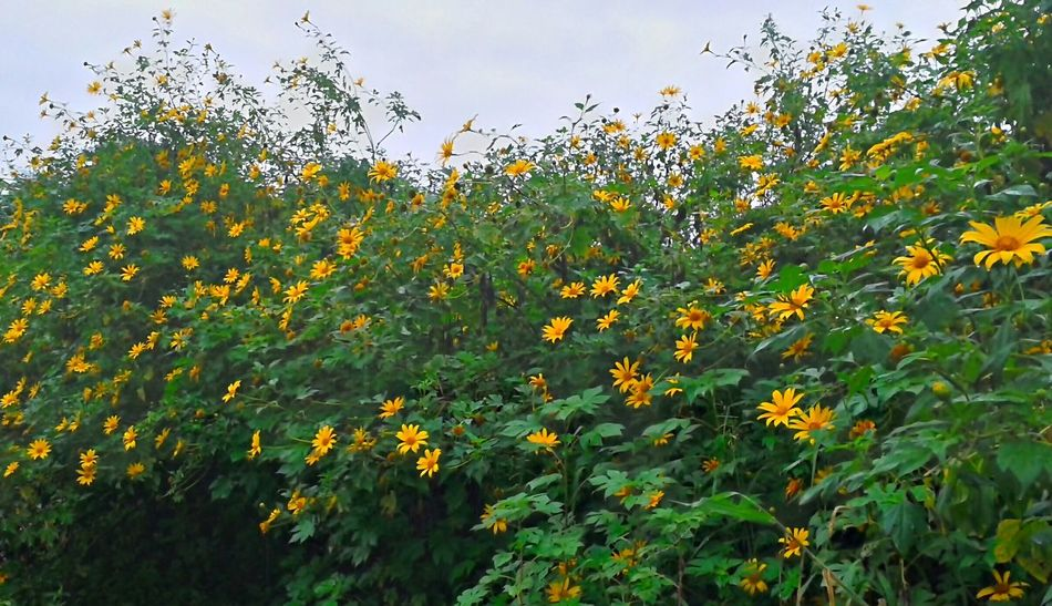 Flores Natureza Perfeita♡♥ Baixada Santista Brasil ♥ Coisa De Deus Desenho De Deus Flor Estomalina Floresnativas