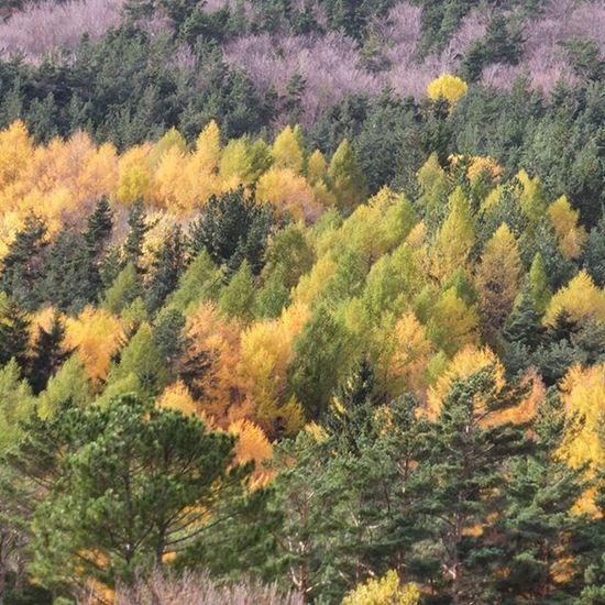 Otoño en Canfranc Nature Huescalamagia Amazing autumn igershuesca