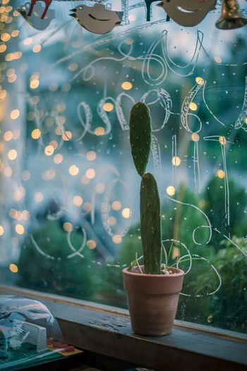 Close-up of potted cactus plant against window