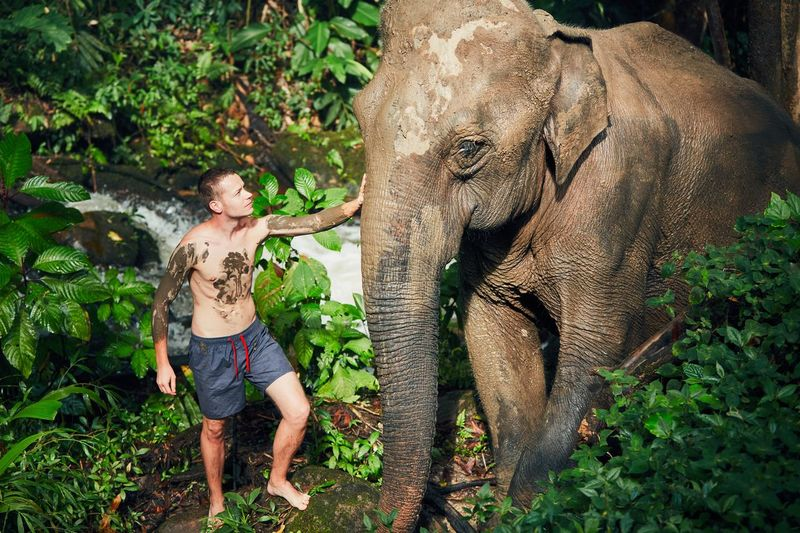 Young traveler with friendly elephant in tropical rainforest in Chiang Mai Province, Thailand. Confidence  Exploring Freedom Happy Man Thailand Tourist Travel Vacations Adventure Animal Wildlife Beauty In Nature Elephant Enjoying Life Enjoyment Friendship Happiness Jungle Nature One Person Outdoors People Rainforest Tourism Traveler The Traveler - 2018 EyeEm Awards