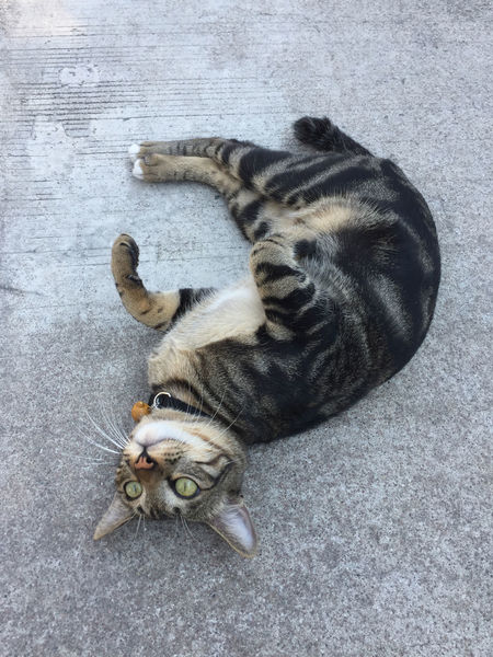Tigger Funny Roll Tigger Animal Themes Cat Close-up Cute Day Daylight Domestic Animals Domestic Cat Feline Frisky High Angle View Lying Down Mammal Naughty Cat No People One Animal Pets Playful Playful Cat Relaxation
