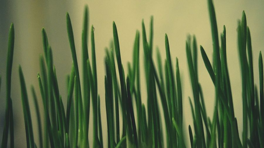 Grass Green Color Nature_collection Macro_collection Nature_collection Landscape_collection EyeEmNatureLover Eye4photography  EyeEm Best Shots EyeEm Nature Lover Beautiful Nature Flowers, Nature And Beauty