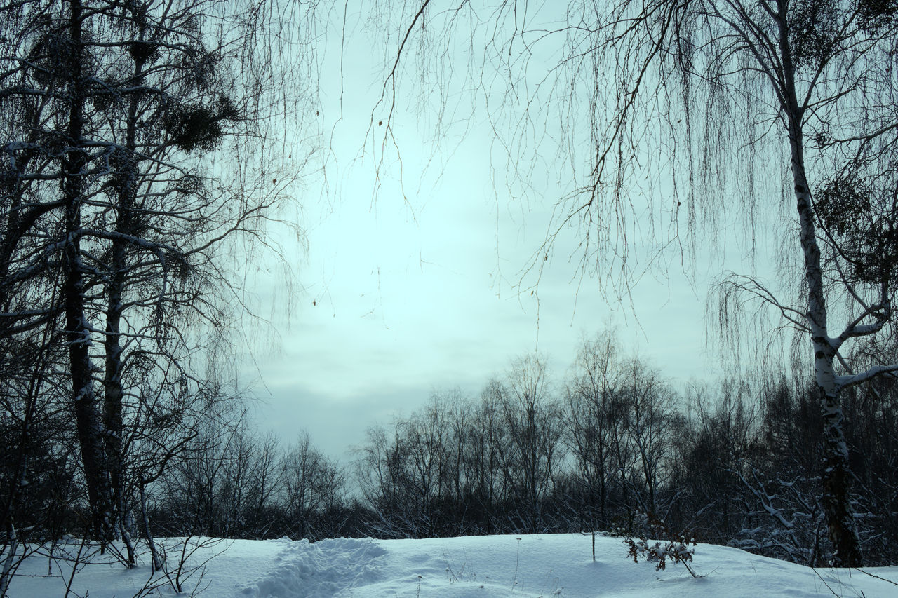 BARE TREES ON SNOWY FIELD DURING WINTER
