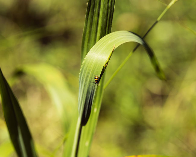 Leaf Flower Close-up Animal Themes Grass Plant Green Color Blade Of Grass Ladybug Tiny Bug Insect