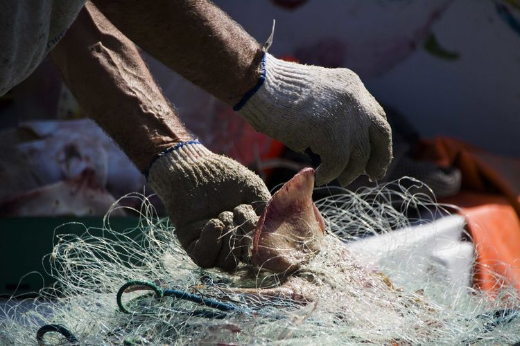 Cropped Image Of Fisherman Removing Fish From Net