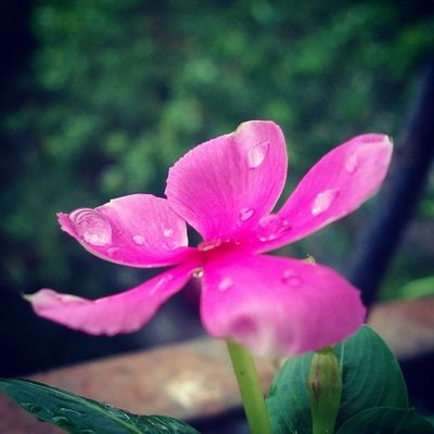 Mogra Flower Nokia  Lumia Lumia920 Nokia_camera Earlymorning  Instanature Instaflower Instaaddict Followforfollow Doubletap