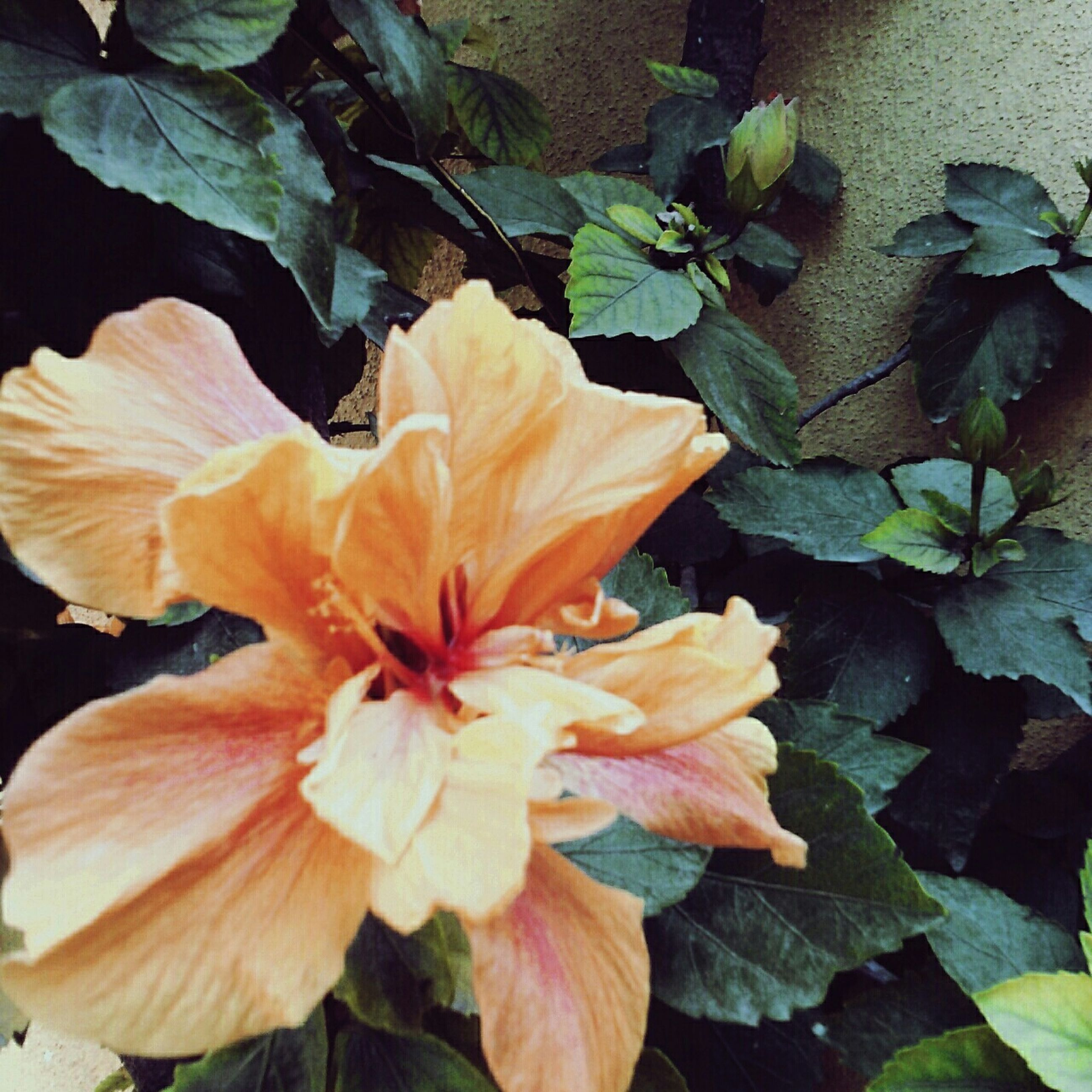petal, flower, flower head, fragility, leaf, freshness, growth, beauty in nature, close-up, plant, nature, blooming, high angle view, single flower, stamen, in bloom, botany, no people, hibiscus, orange color