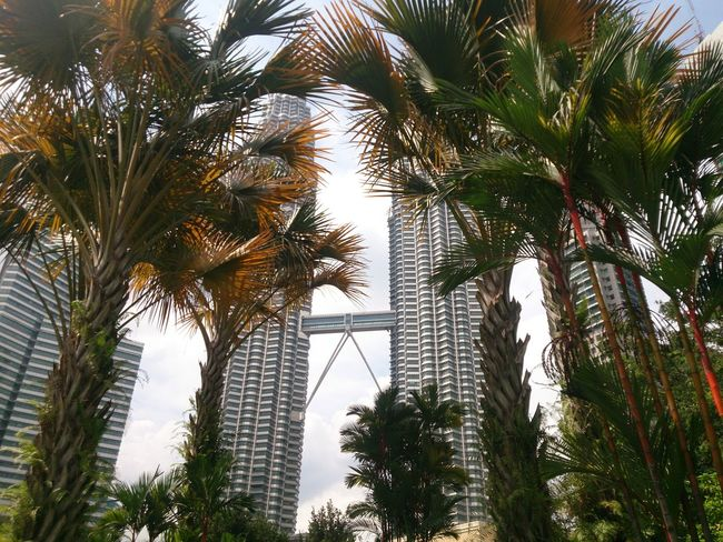 City Skyscraper Landscape Travel Destinations Tree Urban Skyline Growth Cityscape Architecture Travel Outdoors Palm Tree Vacations Downtown District Sky Day Nature Kuala Lumpur Malaysia Truly Asia KLCCTwinTower KLCC❤❤ Celebration ASIA High Angle View Modern