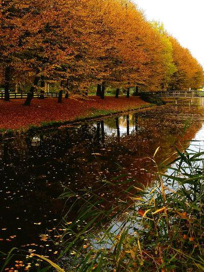 Tree Water Nature Beauty In Nature Hoorn, Netherlands Netherlands Autumn Colors Autumn Leaves Autumn Tree Nature City Sky Kersenboogerd