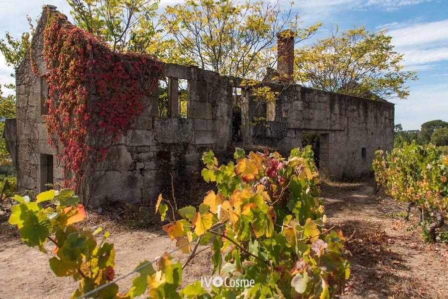 Old Ruin Architecture Built Structure Travel Destinations Religion Flower Ancient No People History Day Building Exterior Tree Ancient Civilization Sunlight Outdoors Nature Sky Agriculture Seia Serradaestrela Portugal 🇵🇹