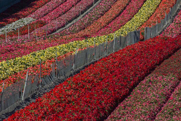 Full frame shot of flowers in field