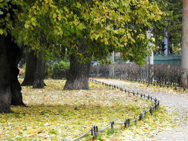 Tree Nature Day WoodLand Nature Tree Autumn🍁🍁🍁 Autumn Walking Colors Of Autumn 😚 Tavrichesky Garden Tree Area Colors Of Sankt-Peterburg Sankt-Petersburg Russia