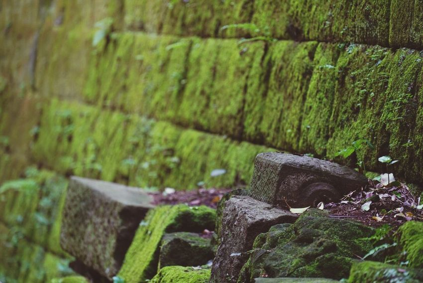 No People Day Outdoors Focus On Foreground Green Color Moss Old Ruin Nature Close-up Steps Laputa Ghibli Sarushima Japan Photography Japan Green Forest Beauty In Nature Growth Plant Dreamy Wood