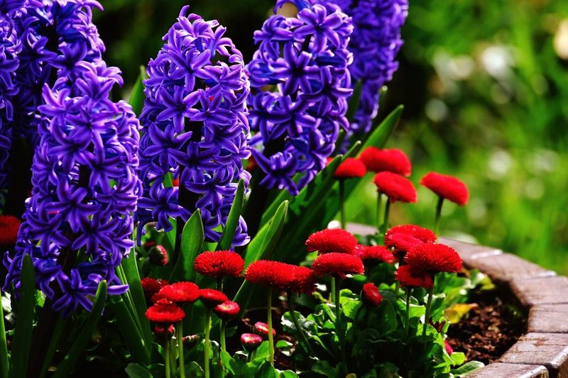 Flower Beauty In Nature Growth Purple Freshness Fragility Nature Petal Green Color Flower Head Day Plant No People Outdoors Focus On Foreground Blooming Park - Man Made Space Close-up