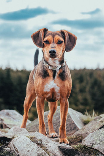 Portrait of dog standing on rock