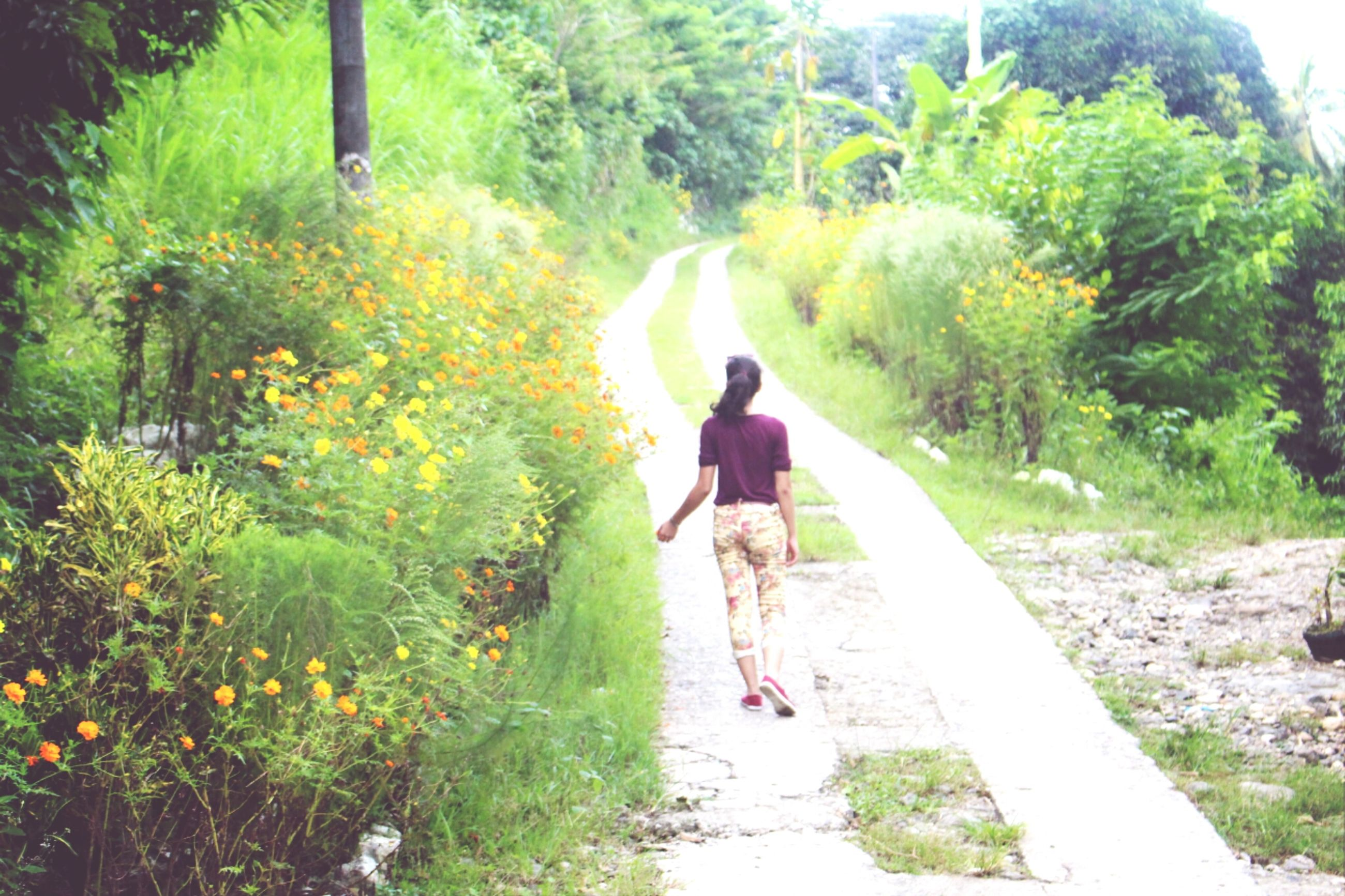 full length, tree, lifestyles, rear view, leisure activity, walking, growth, the way forward, casual clothing, plant, green color, nature, person, men, sunlight, footpath, day, standing