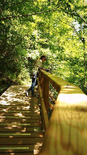 Wood Iphone6 IPhoneography Freedom Landscape Anıyakala Green Green Green!  Nature Photography Karadeniz,sinop,erfelek şelaleleri Erfelektatlıcaşelaleri