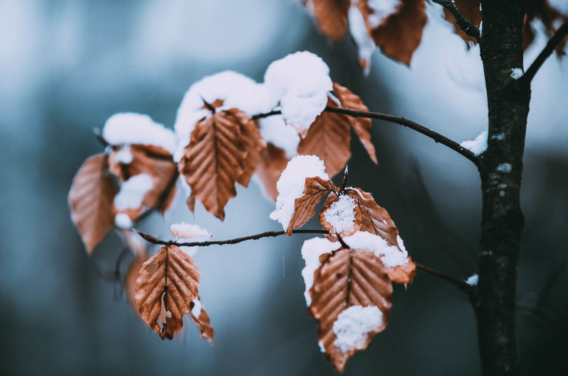 Close-up of snow on dry leaves during winter