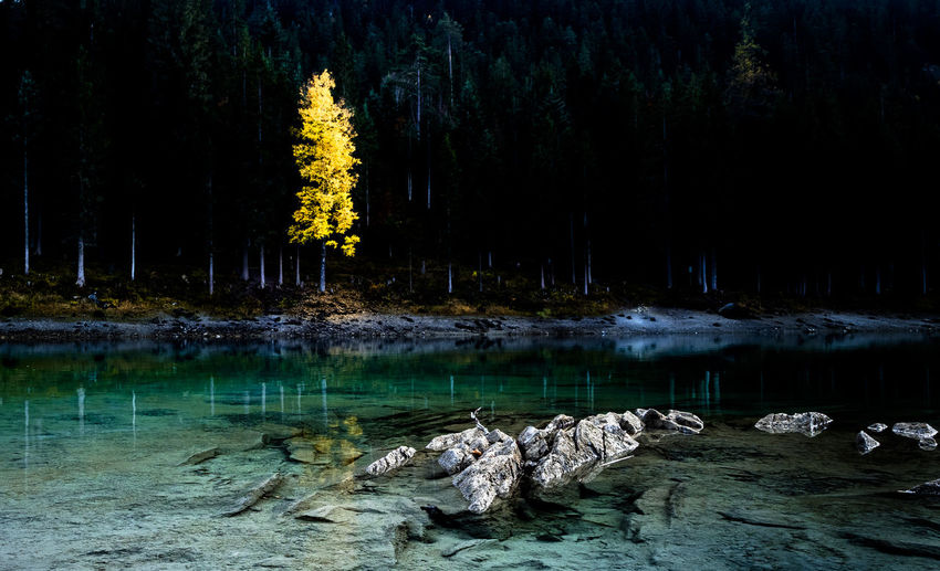 Scenic View Of Lake In Forest At Night