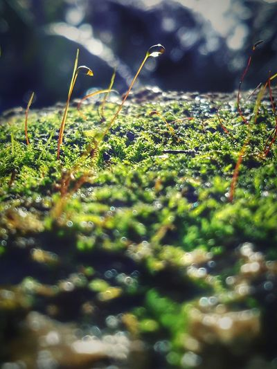 Nature Growth