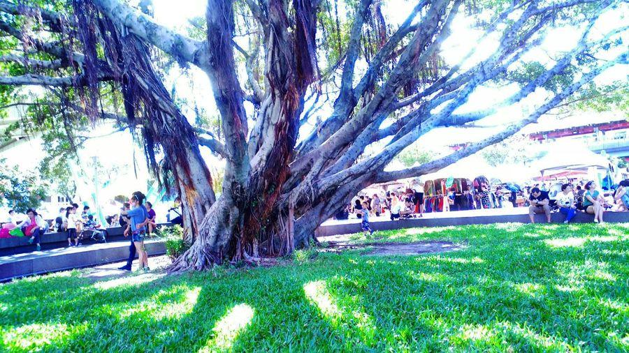 Nature Tree Art