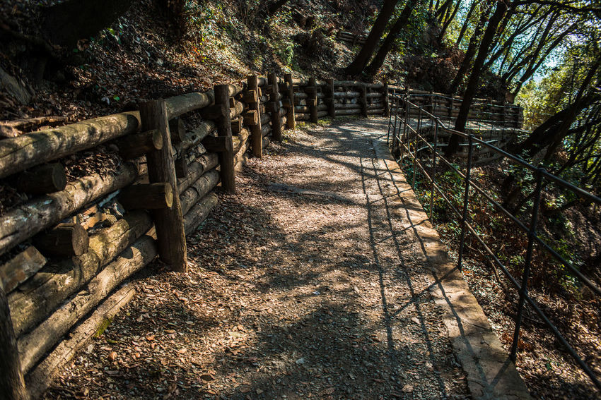 Dry Leaves Hiking Portofino Natural Regional Park Trekking Beauty In Nature Day Deciduous Forests Fence Forest Forest Photography Liguria Nature No People Outdoors Park Path In The Woods Pathway Shadow Sunlight The Way Forward Tree Woods