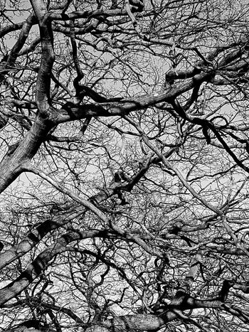 Pattern Branch Beauty In Nature Outdoors Abstract No People Bare Tree