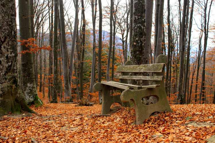 Autumn Forest Land Tree Change Leaf Plant Plant Part Tree Trunk Trunk Tranquility Nature WoodLand Day Bench Beauty In Nature Tranquil Scene No People Seat Non-urban Scene Outdoors Leaves Fall Autumn Collection Park Bench Autumn Mood
