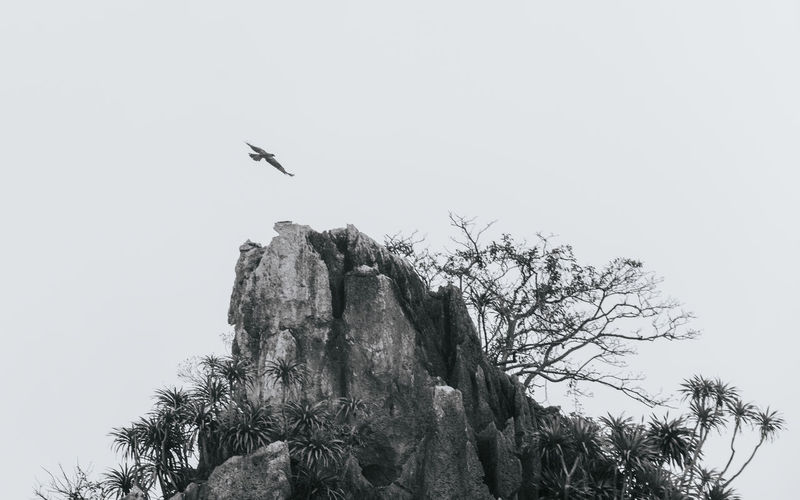 Sky Animal Themes Animal Animal Wildlife Tree Vertebrate Bird Animals In The Wild Plant Low Angle View One Animal Nature Flying Clear Sky No People Day Branch Outdoors Tranquility Ha Long Bay