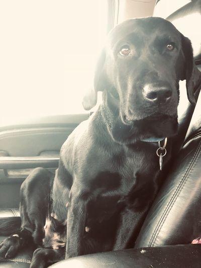 Close-up of dog sitting on car
