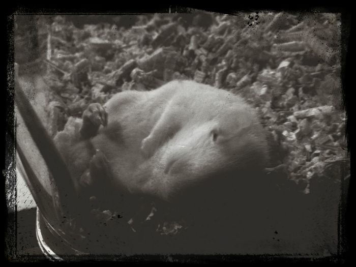 Capa Filter Sleeping Eyeem Best Shots - Animals Blackandwhite