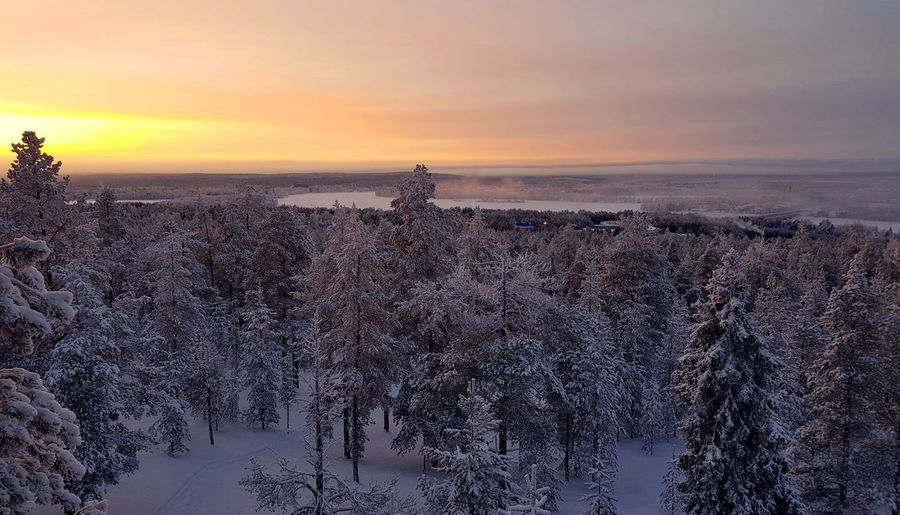 Beautiful winter landscape of a snowy forest and colorful sunset sky Lapland Landscape Sunset Silhouettes Winter Landscape Beauty In Nature Cold Temperature Colorful Environment Land Nature No People Non-urban Scene Outdoors Plant Scenics - Nature Sky Snow Snowy Forest Sunrise Sky Sunset Tranquil Scene Tranquility Tree Winter Winter Forest Winter Wonderland