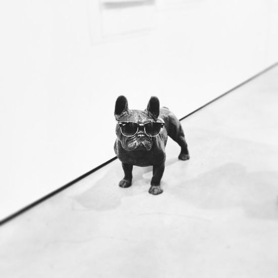 Dog Frenchbulldog Street Fashion Funny Instagram Black + White Eyem Best Shots - Black + White
