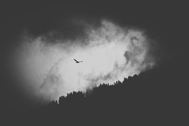 Ninoori Melancholic Landscapes Blackandwhite Bird Melancholia