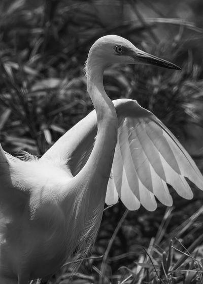 Nikon D500 Bird