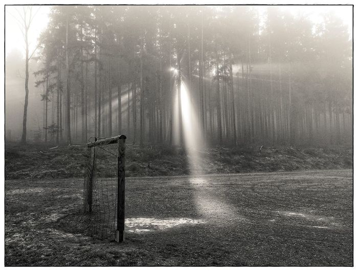 Goal and light finger Blackandwhite Day Fog Forest Goal Lawoe Light Fingers Nature No People Sunlight Tranquility Tree