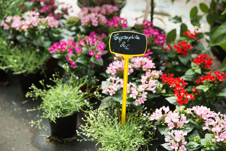 Flowers at the Paris flower market Flower Market Nursery Paris Botany Flower Flower Pot Flower Shop Flowering Plant Pink Color Plant