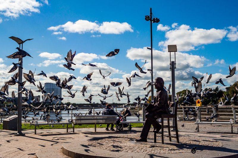 Terry Wogan Memorial Pigeon Terry Wogan My Best Travel Photo Bird Flying Sky