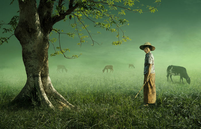 Nature Tree Cows Fog Greenry Men Person Photography Photoshop First Eyeem Photo