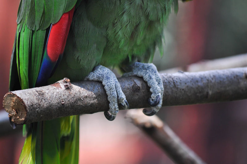 Parrot Feet Animal Themes Animal Wildlife Animals In The Wild Bird Close-up Feet Macaw Nature No People One Animal Outdoors Parrot Perching