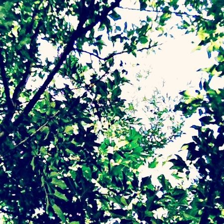 ?? Nature Trees
