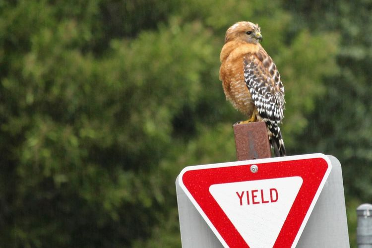 Close-up of a bird perching on a sign
